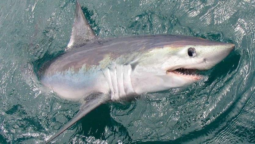 Best Shark Bait