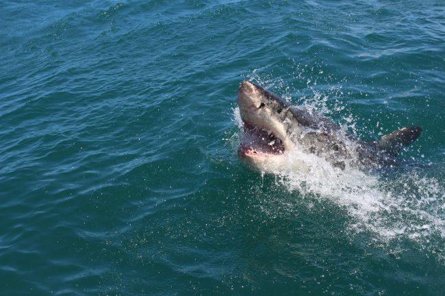 shark fishing gear and tackle
