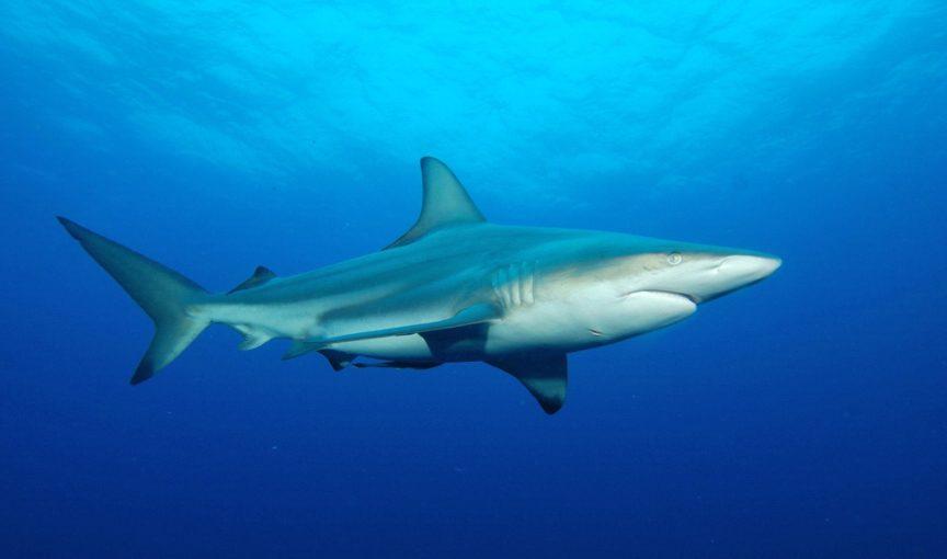 blacktip shark fishing
